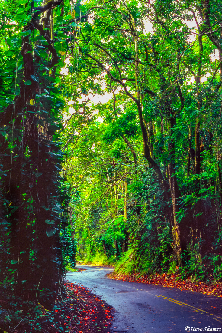 hilo, hawaii, big island, rain forest, highway 19, photo