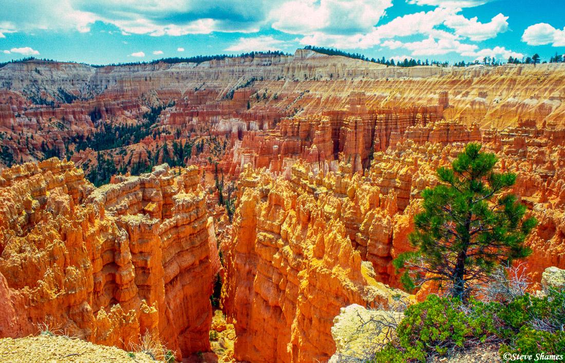 bryce canyon, national park, utah, hoodoos, photo