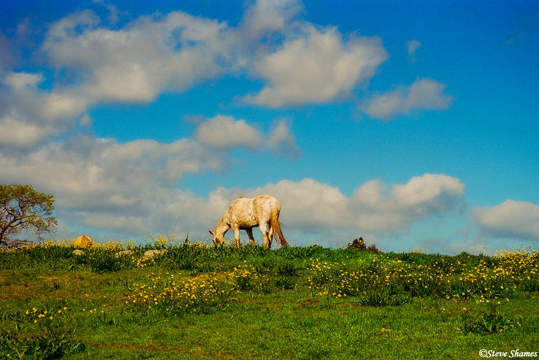 napa valley, northern california horse, big sky, photo
