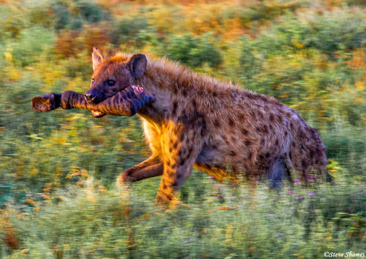 serengeti, hyena, zebra, tanzania, photo
