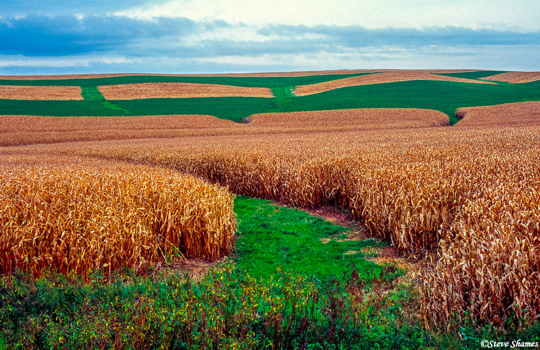 iowa farmlands, cornfields, photo
