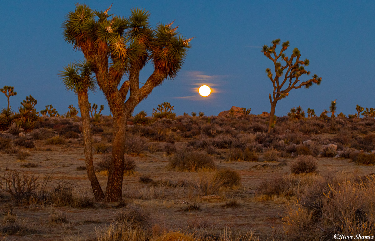 full moon, joshua tree national park, southern california, photo