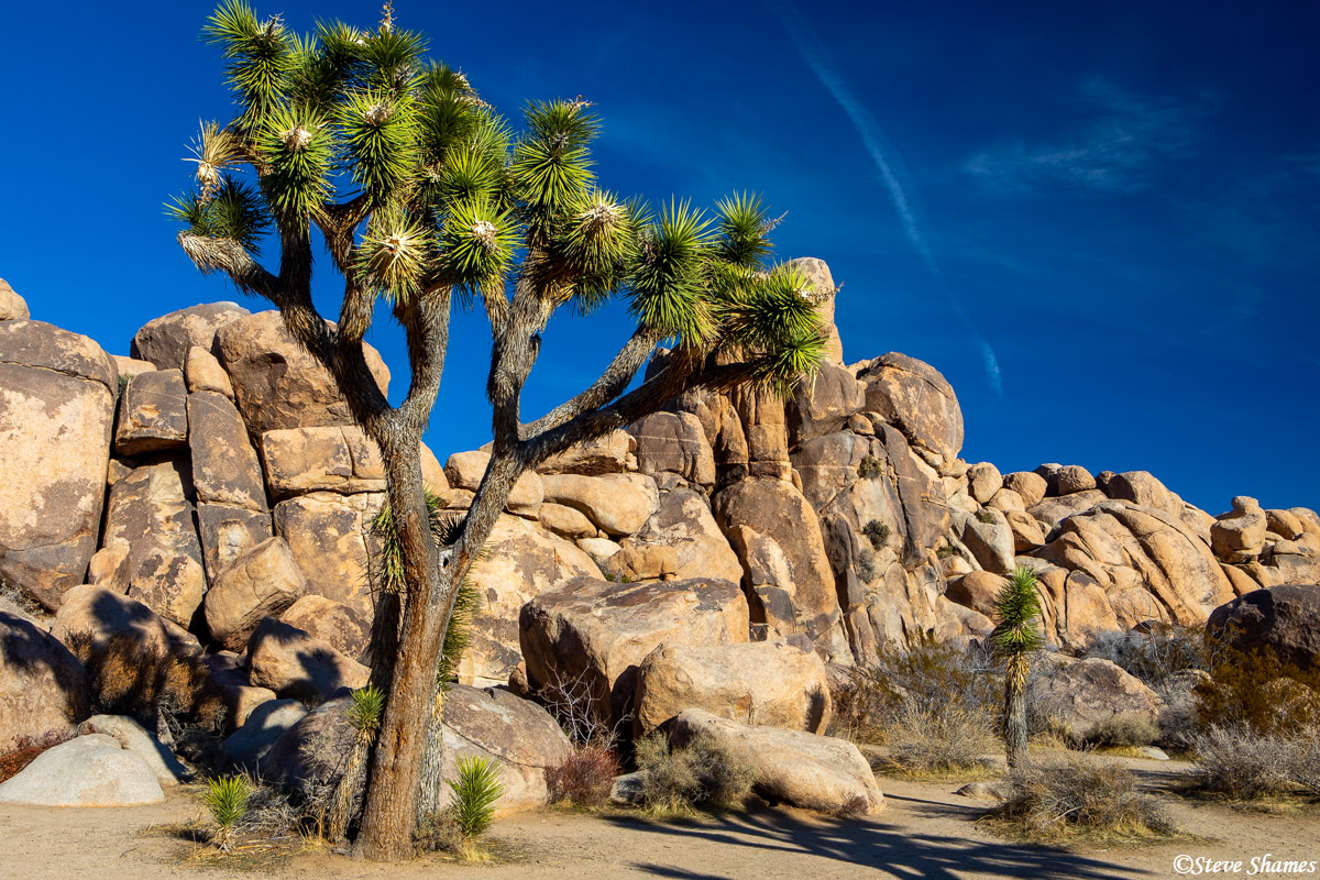 joshua tree, national park, southern california, rock formations, photo