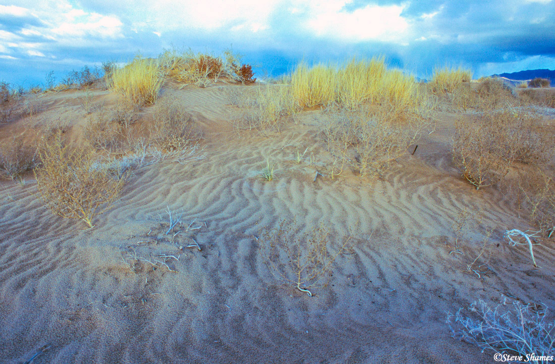 kelso dunes, rippled sand, mojave desert, national preserve, california, photo