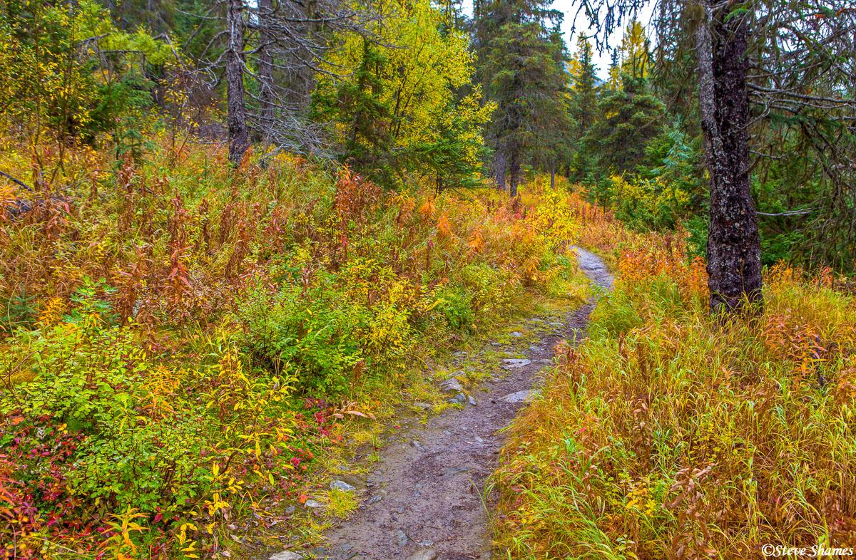 kenai peninsula, alaska, walking trail, multicolored, photo