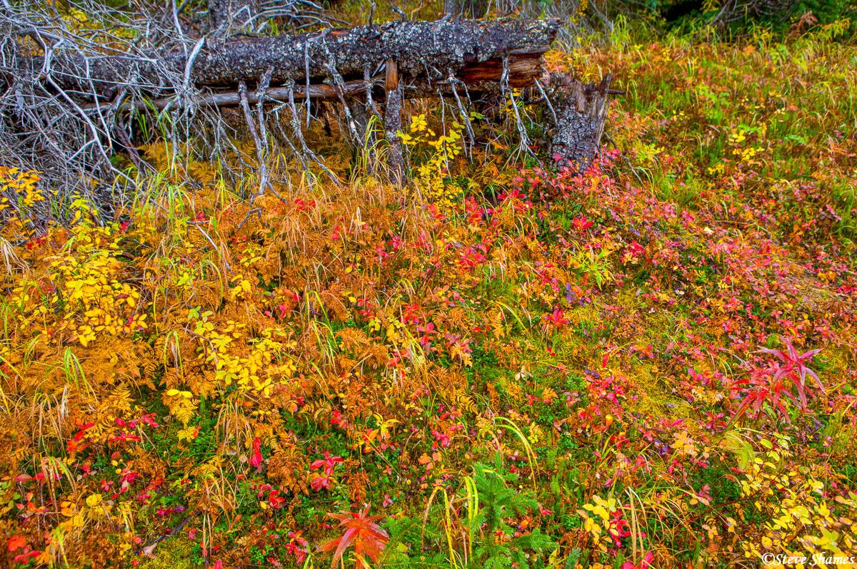 kenai peninsula, alaska, walking trail, photo