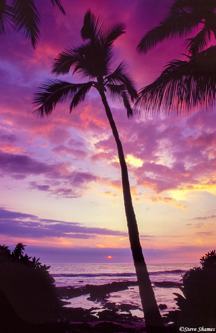 hawaii, big island, kailua kona, sunset, palm tree, photo