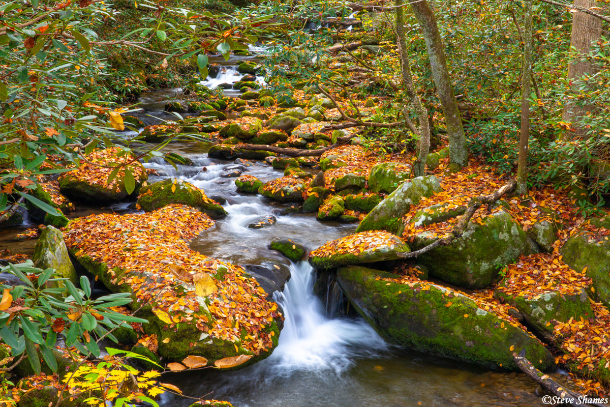 I like the leaf covered rocks along this creek.