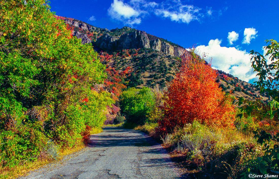 logan canyon, utah, fall colors, photo