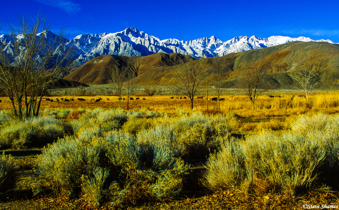 lone pine, california, owens valley, mt whitney, mountain scenes, photo