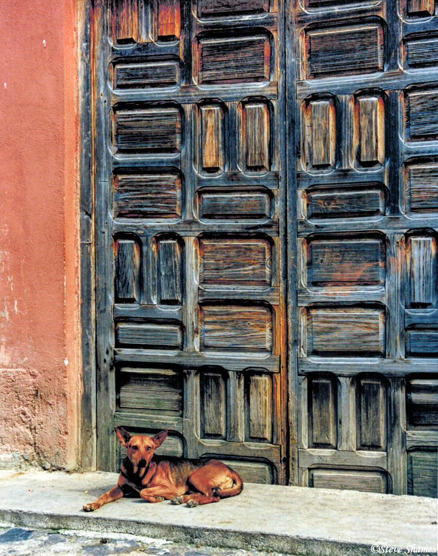 A content looking dog in front of a charming door.