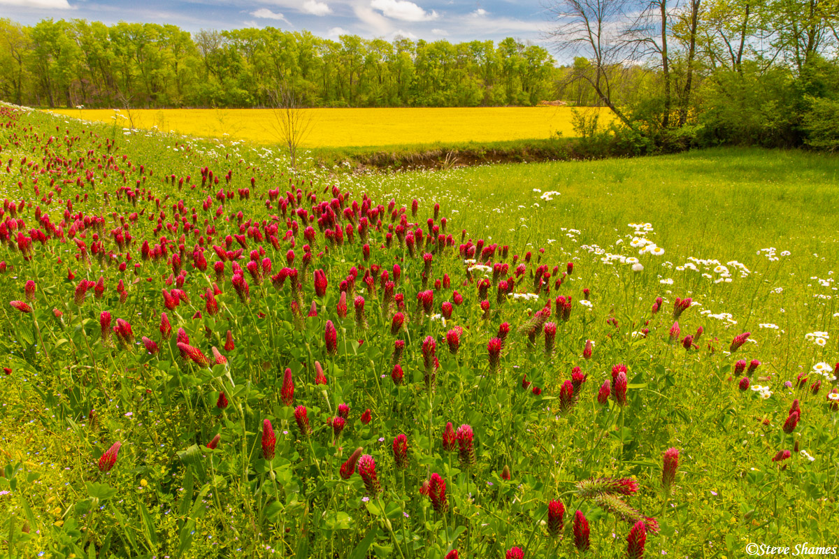 Beautiful spring colors along the parkway in Mississippi.