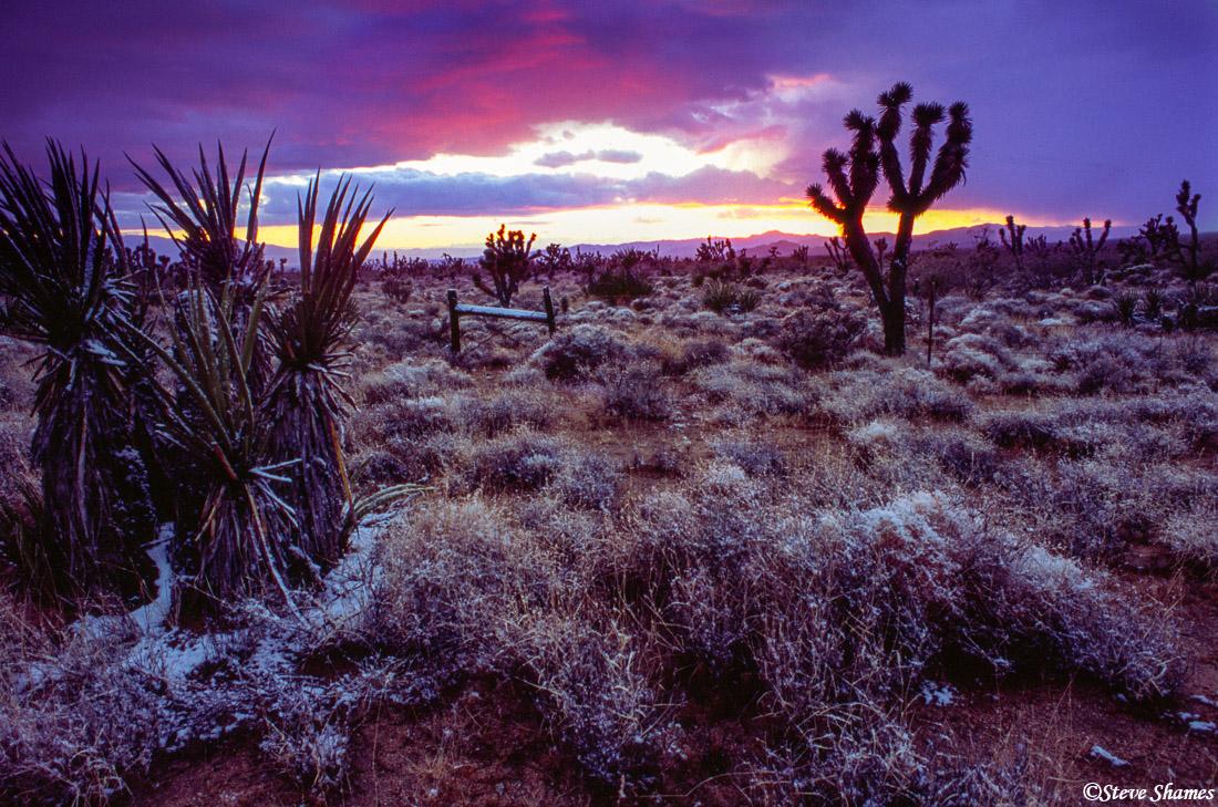 mojave national preserve, california, dusting of snow, photo