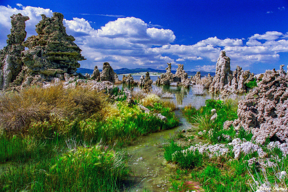 mono lake, california, tufa forest, photo