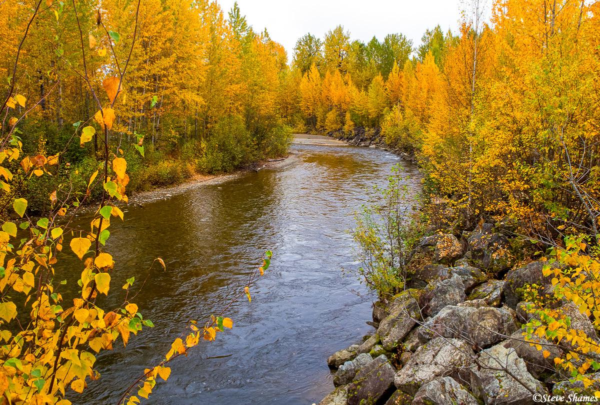 montana creek, campground, alaska, vibrant trees, photo