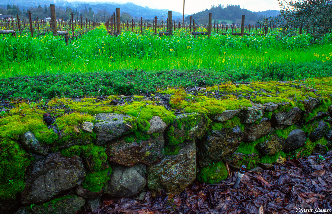 napa valley, northern california, moss covered rocks, photo