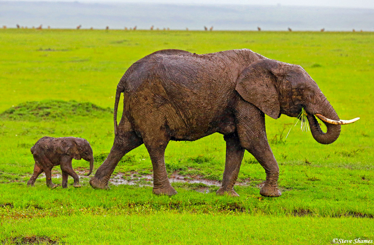 masai mara, national reserve, kenya, mother elephant, calf, photo