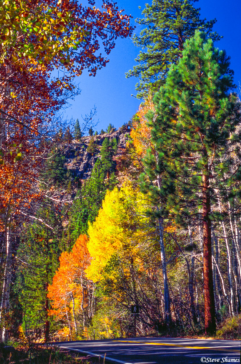 highway 89, california, fall colors, sierras, photo