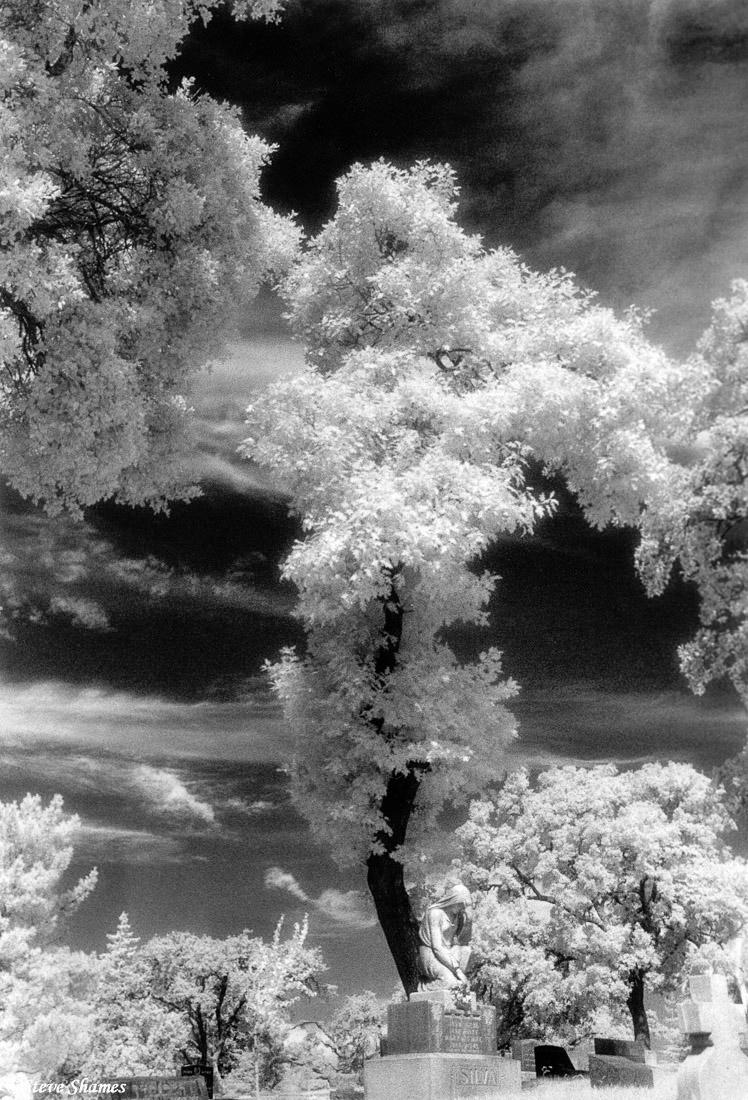 napa cemetery, california, infrared film, photo