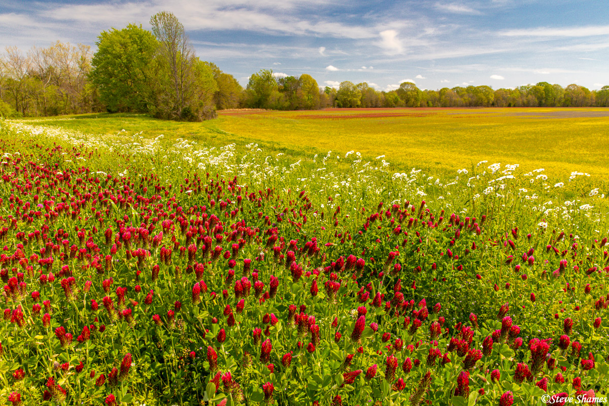 A delightfully colorful scene along the Natchez Trace Parkway in Mississippi. I like the layers of red, white, and yellow flowers...