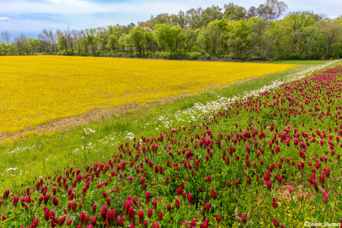 Great spring colors along the Natchez Trace Parkway.