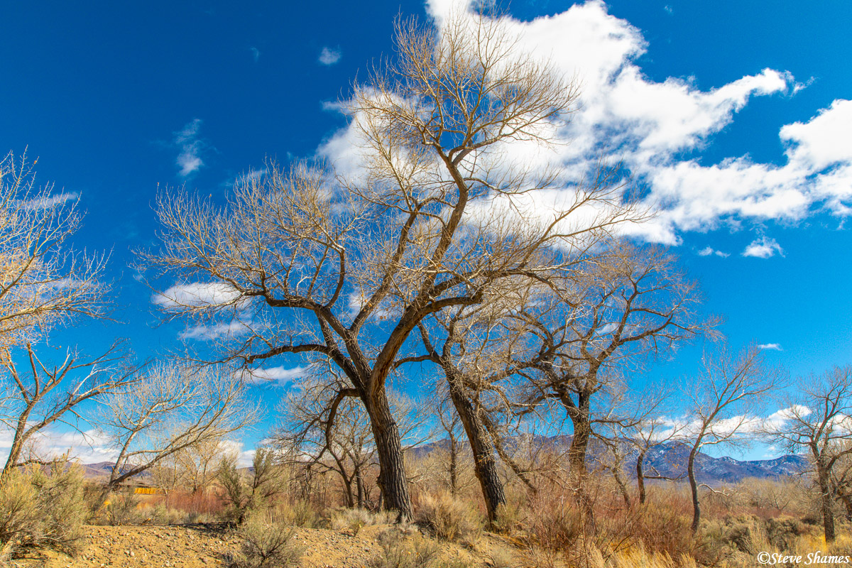 Miles away from civilization, a clear blue Nevada sky. This was by Lahontan State Park on the way to Fallon.