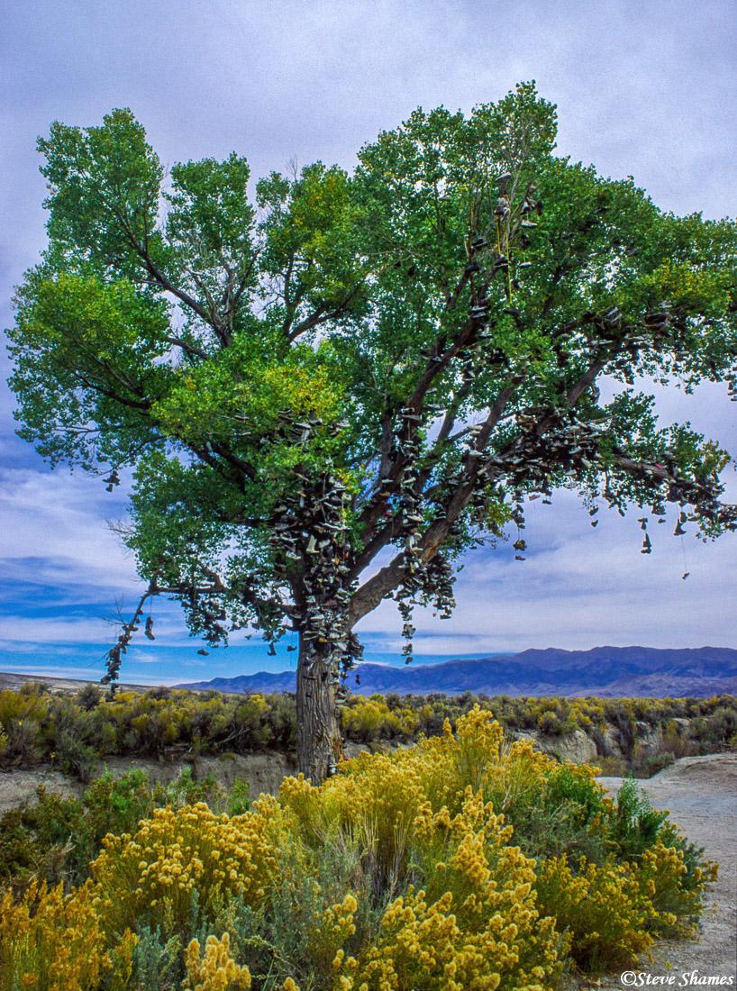 shoe tree, highway 50, fallon nevada, photo