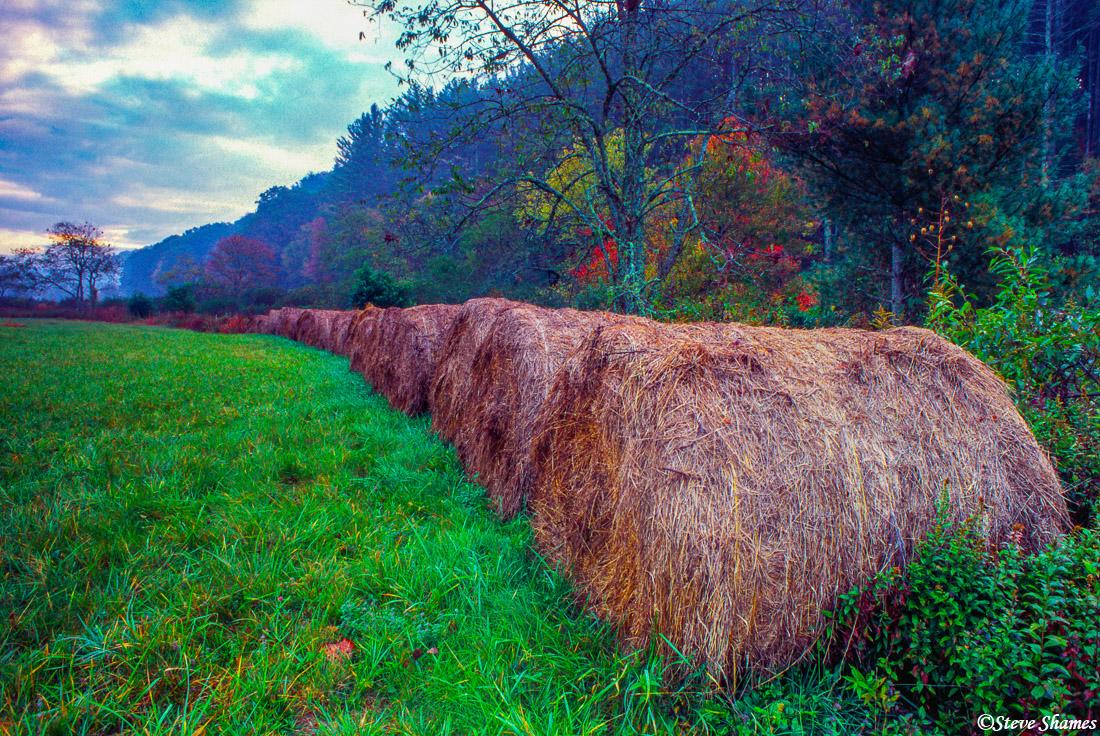 laurel springs, north carolina, hay bales, photo