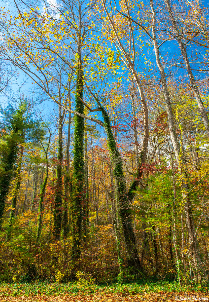 There is lots of color in the trees of North Carolina.