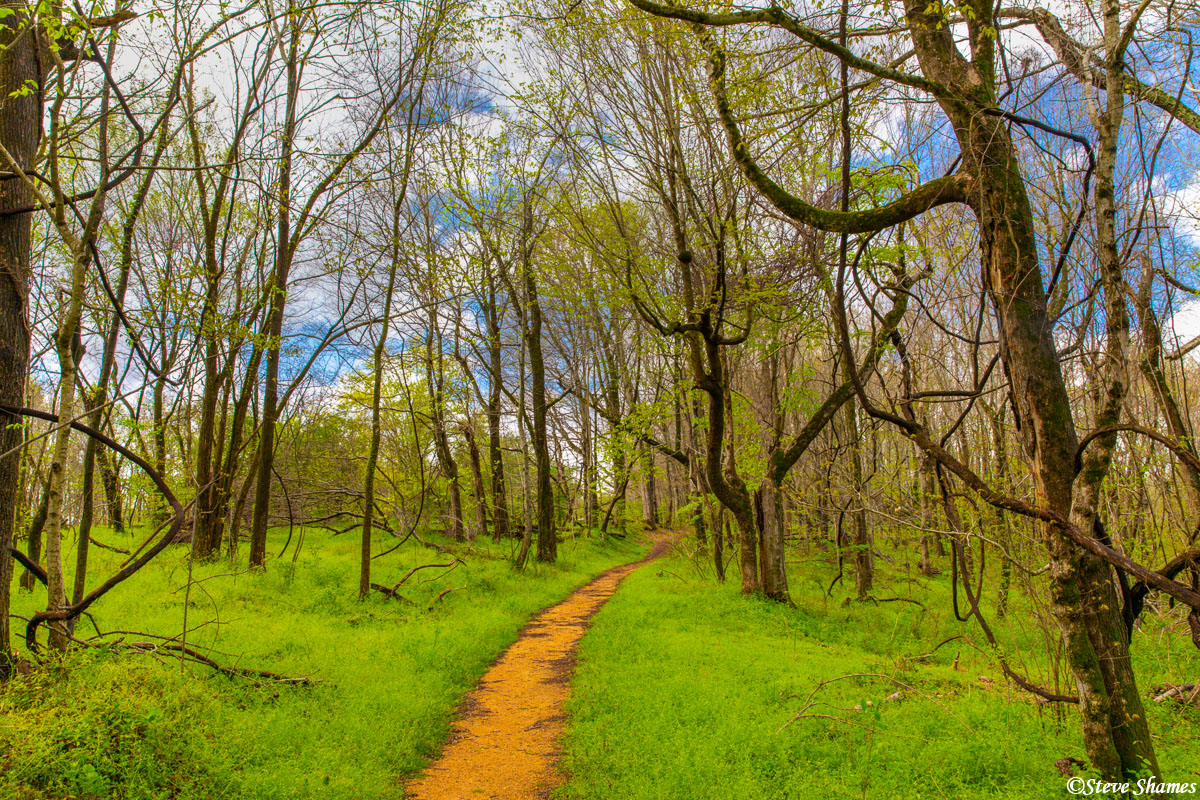 This trail through the lush woods in Tennessee is the original Natchez Trace walking trail. Twenty or thirty miles a day on foot...