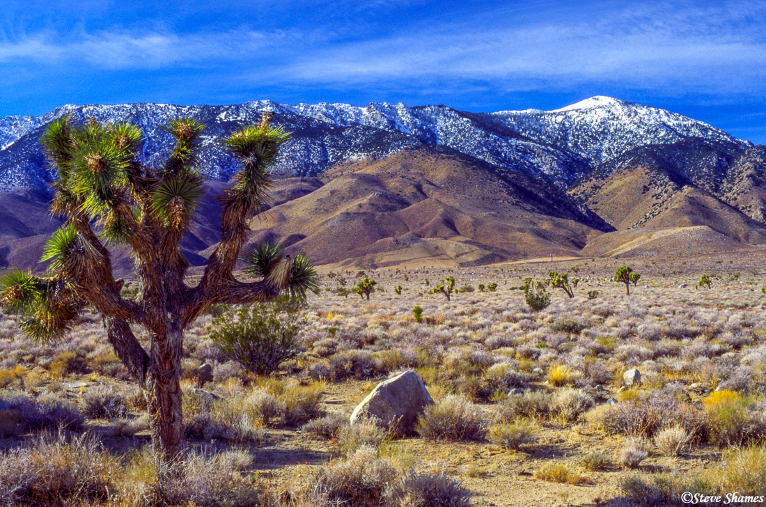 highway 395, southern california, lone cactus, snow capped mountains, photo