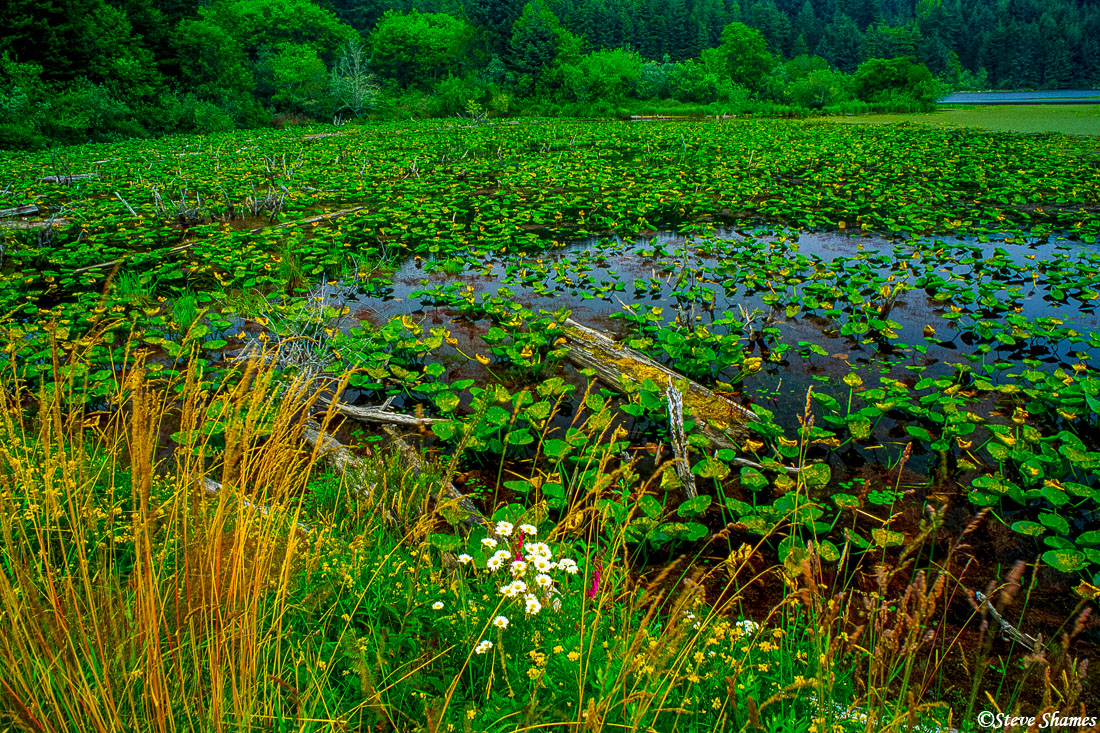 oregon coast, lush marsh, photo