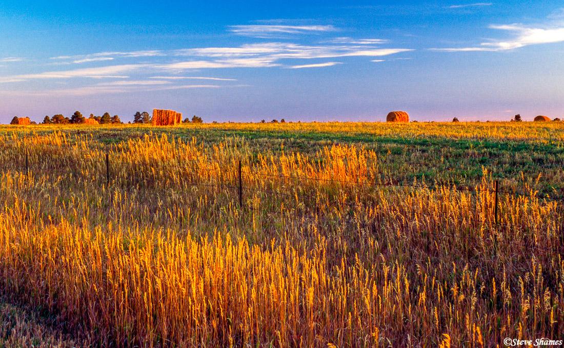 sundance wyoming, glowing field, just before sunset, photo