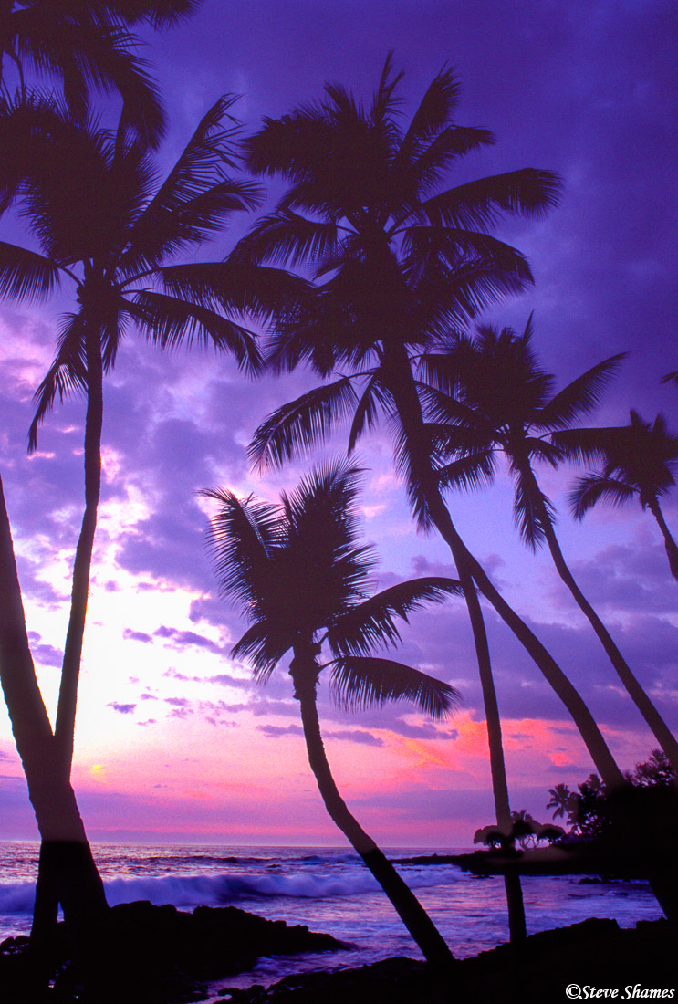 Palm trees on the drier Kona side of the island really add to the mellow sunset vistas.