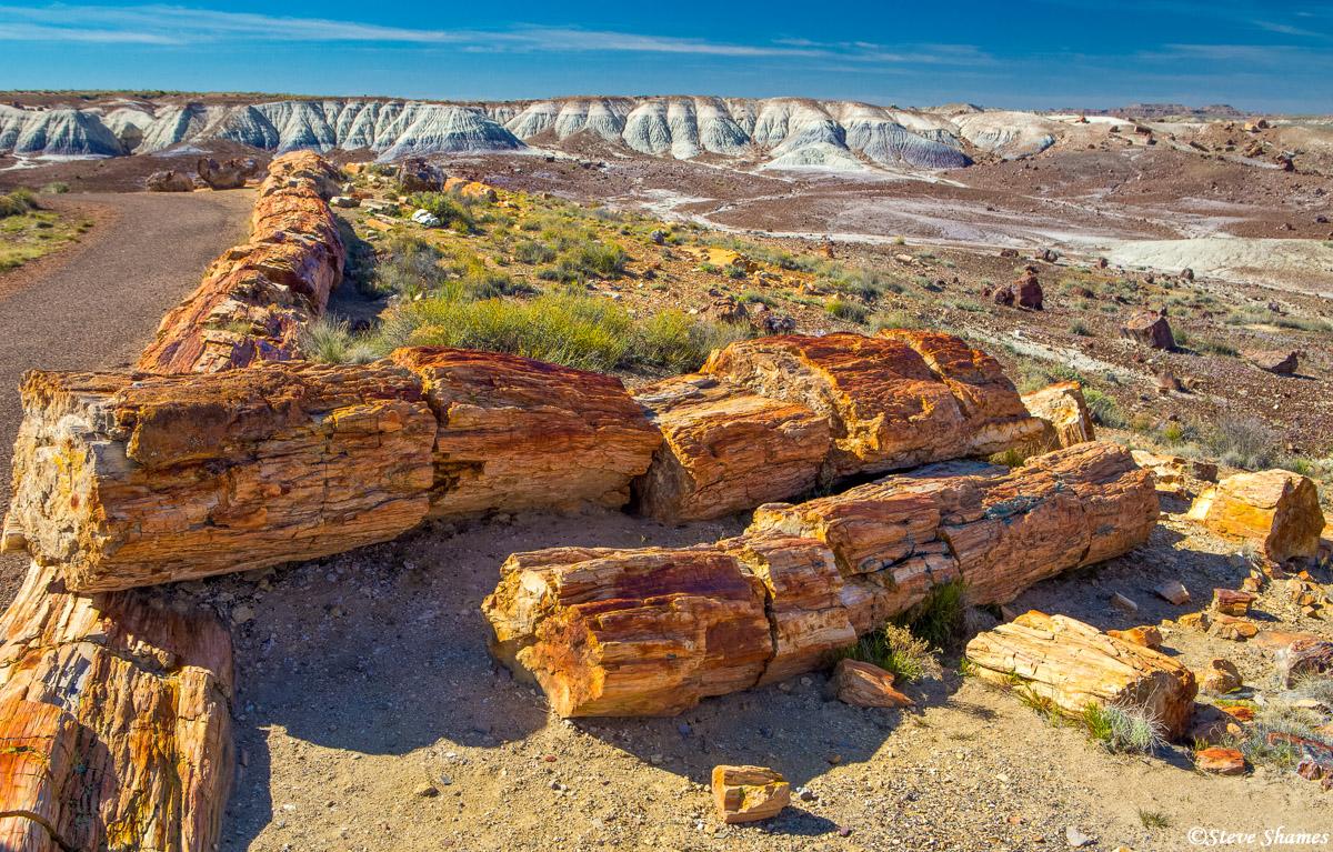petrified forest, national park, arizona, dead trees, photo