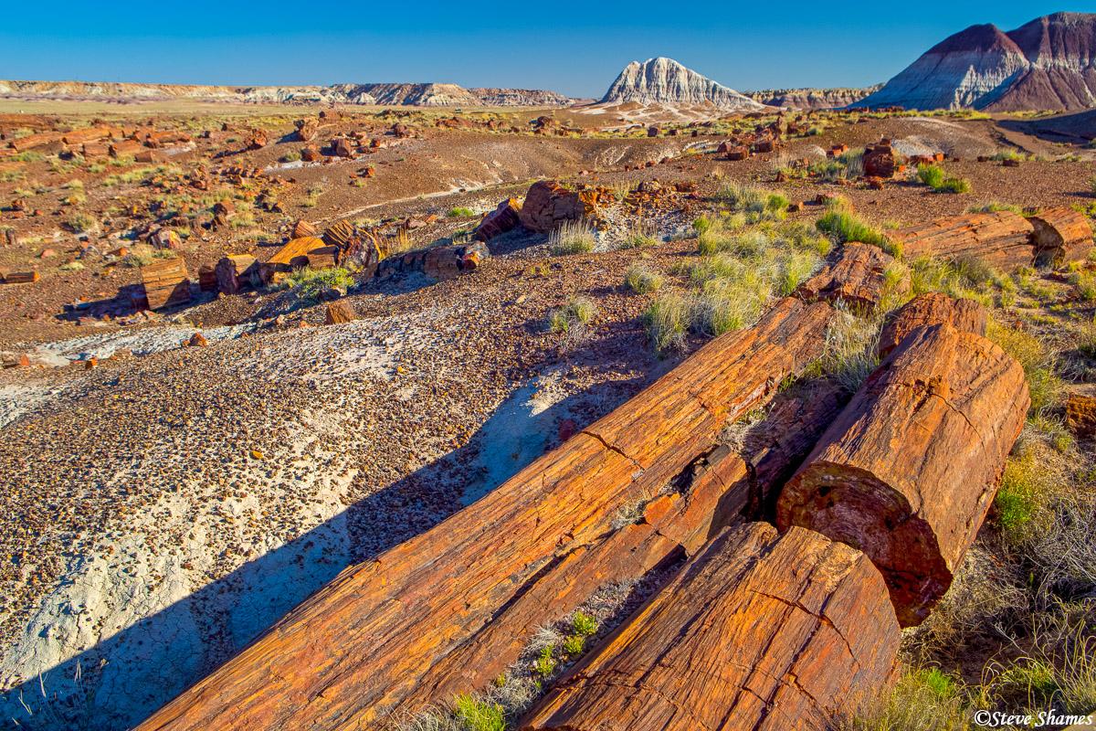 petrified forest, national park, arizona, logs, photo