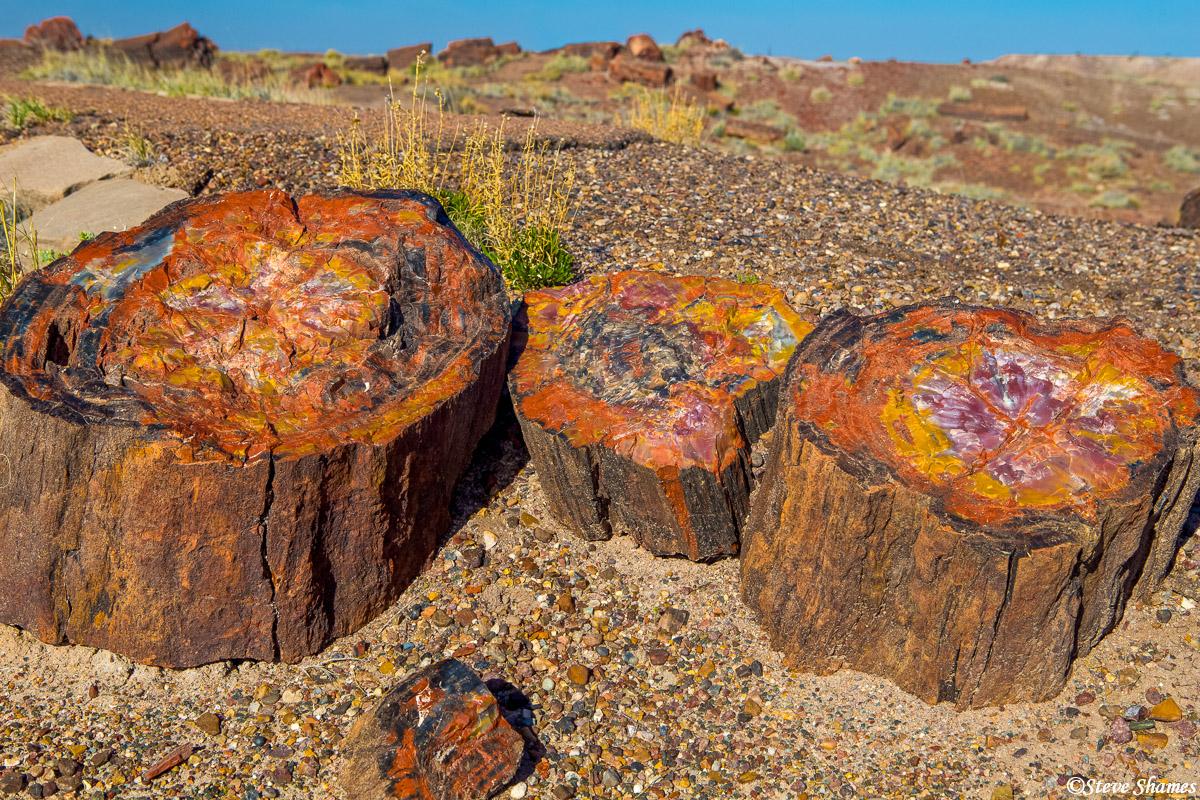 petrified forest, national park, arizona, petrified wood, stumps, photo