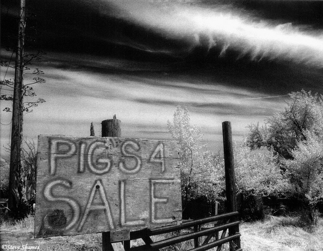 rio linda, business sign, california, pigs for sale, photo