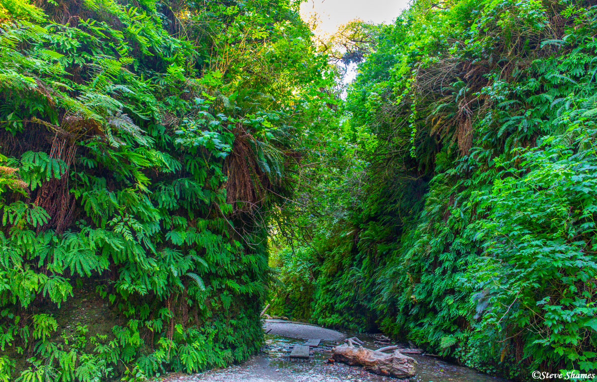 """The prehistoric look of Fern Canyon inspired the makes of """"The Lost Word: Jurassic Park"""" to film a scene here."""