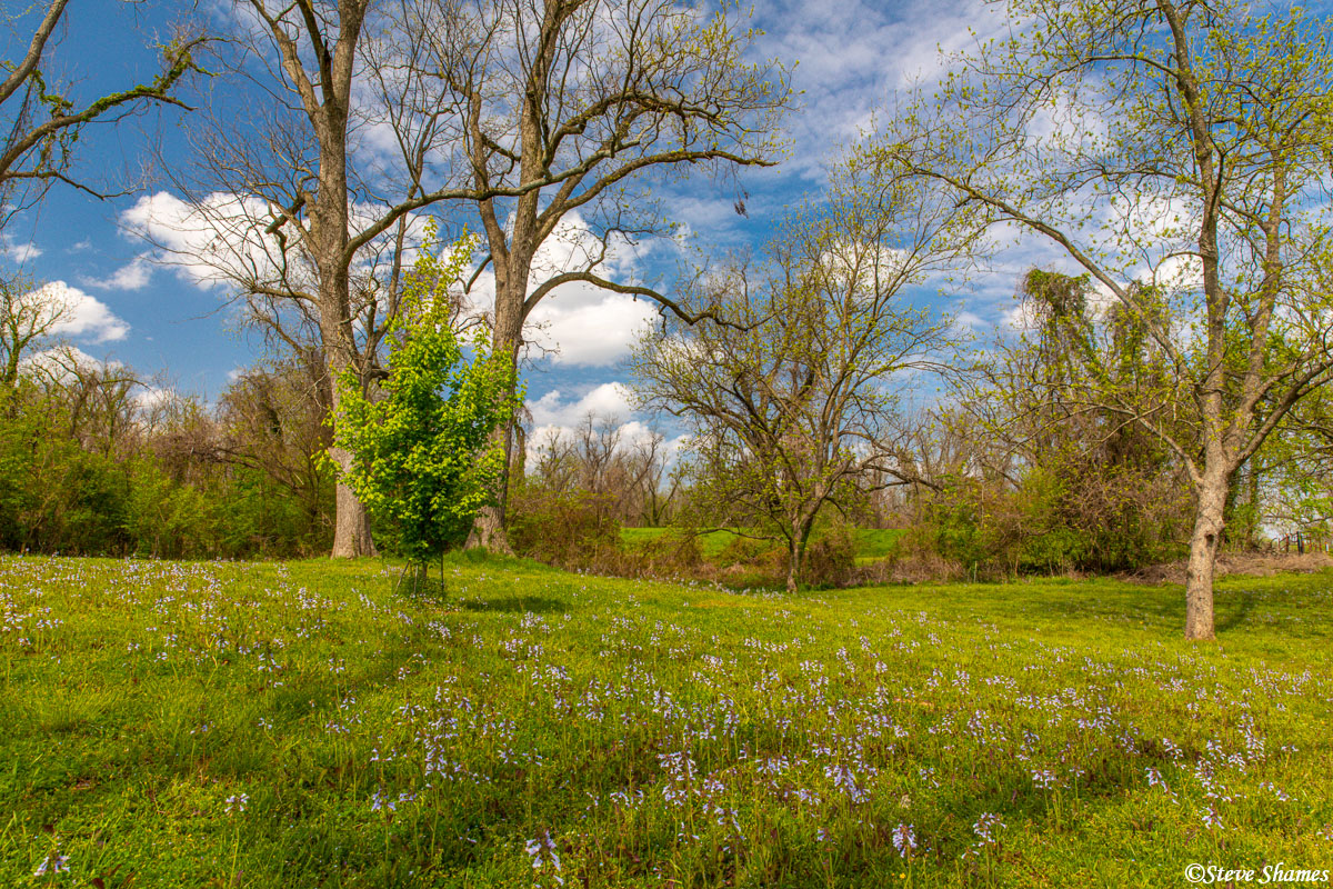 A pleasant spring scene at the Red River National Wildlife Refuge in Louisiana.