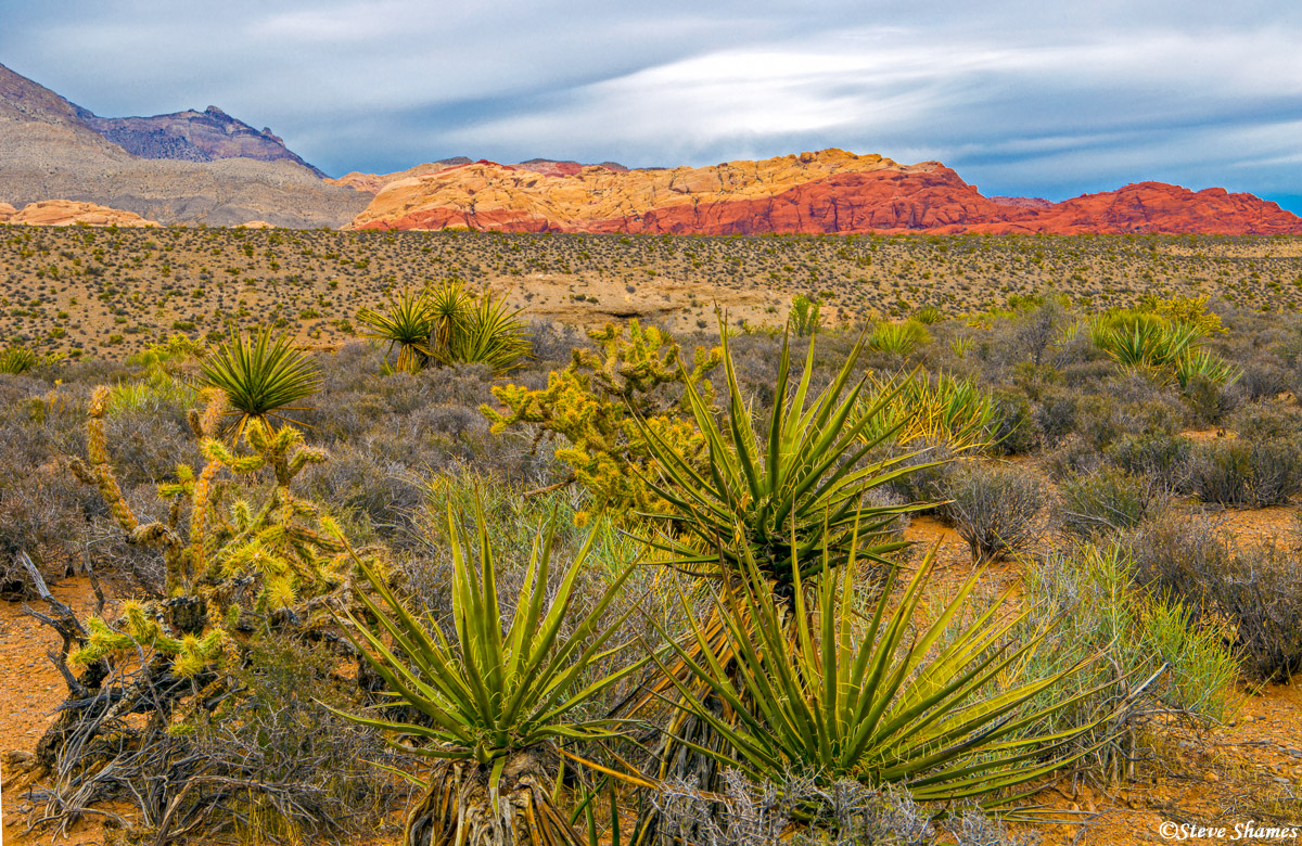 red rock canyon, nevada, desert foliage, photo