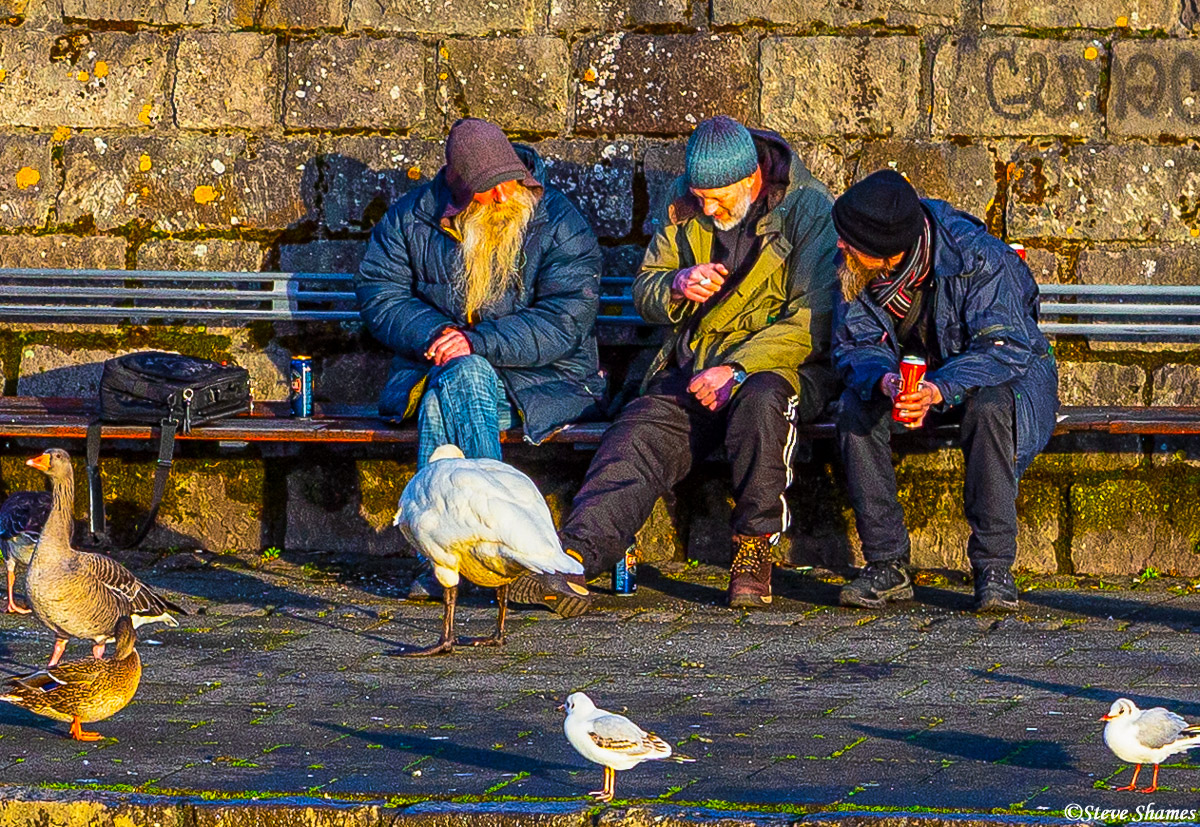 reykjavik men, iceland, ducks and birds, photo