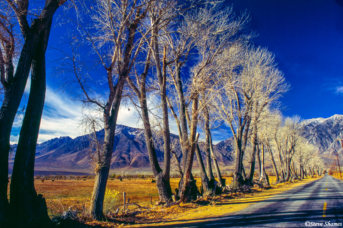 owens valley scene, tree lined road, mountains, california, photo