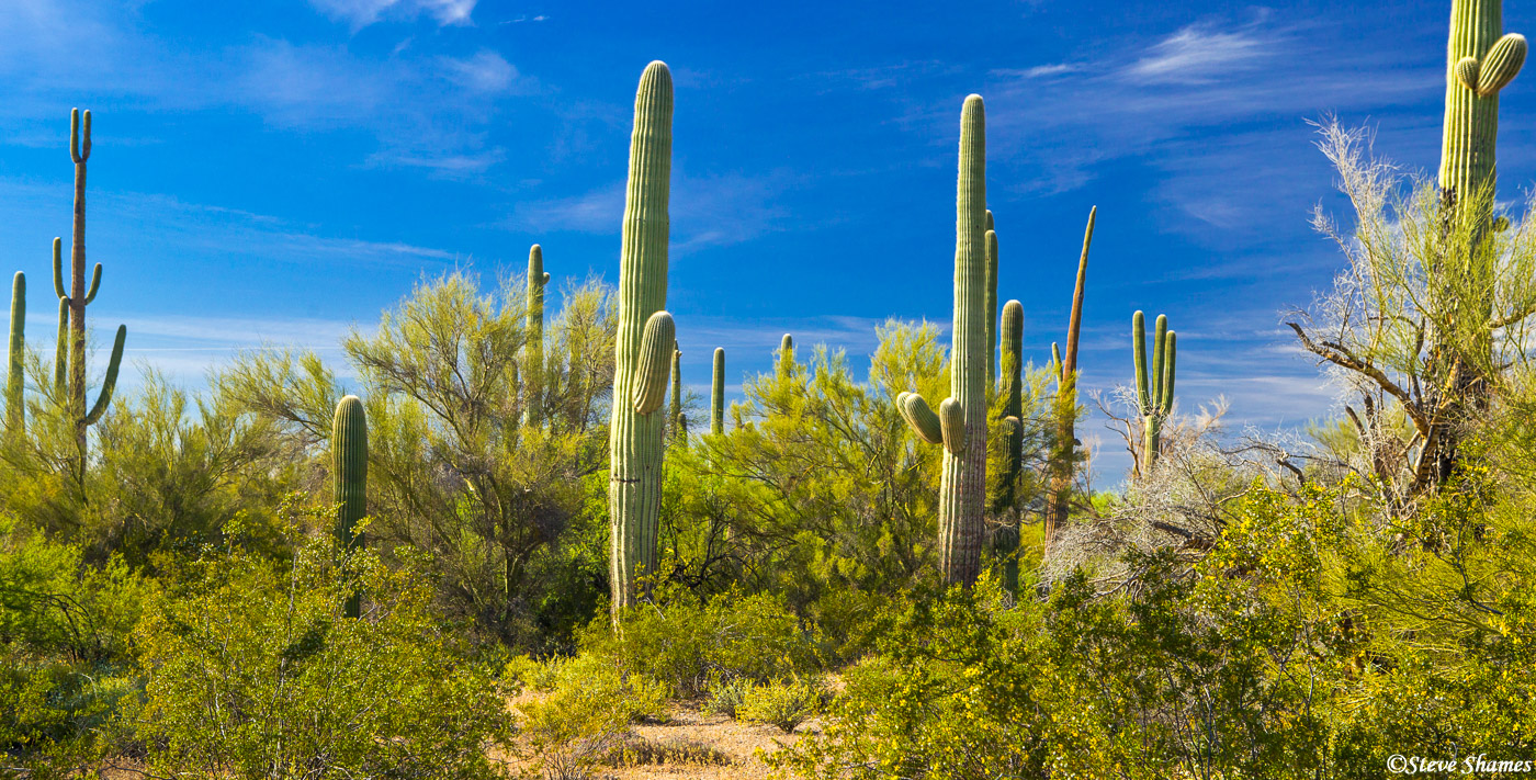 saguaro, national parks, arizona, desert, photo