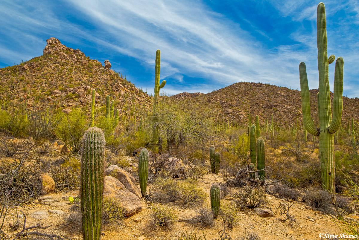 A nice day at Saguaro National Park.