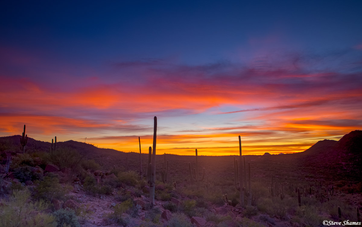 saguaro, cactus, national park, arizona, colorful sunset, photo