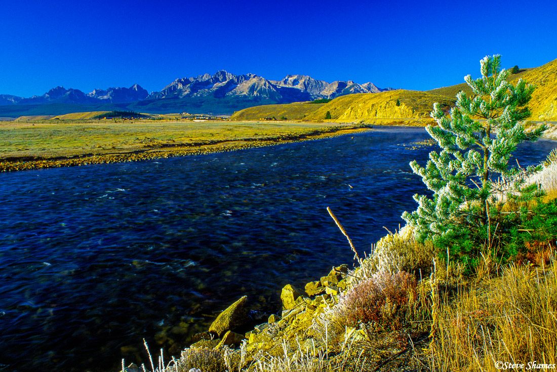 stanely, idaho, salmon river, frost covered tree, photo