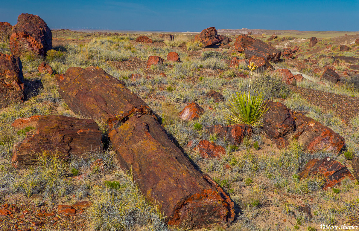 petrified forest, national park, arizona, logs, photo