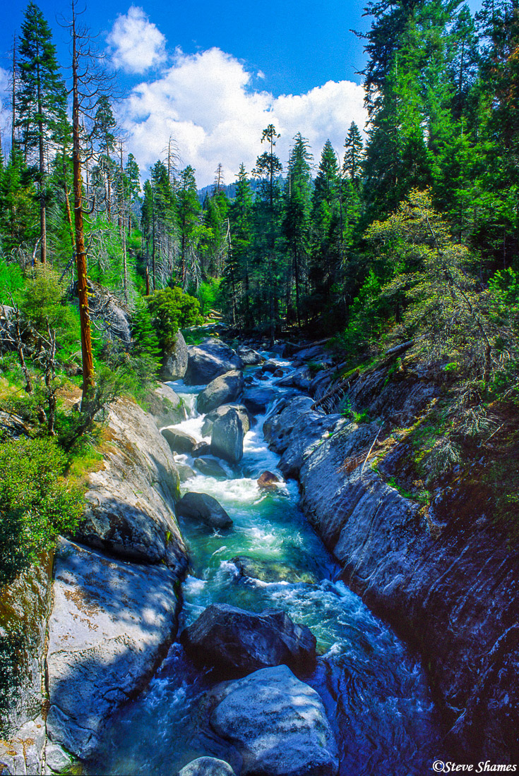 sequoia national park, babbling creek, photo