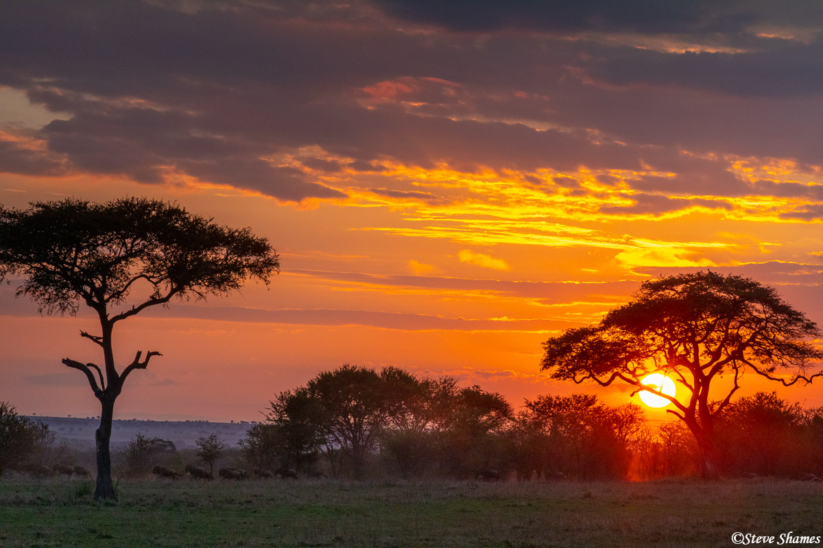 Sunrise in Africa. Its hard to make them out, but the ever present wildebeest are in the foreground.